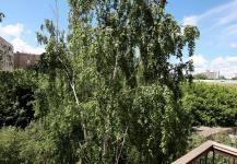lesi-ukrainki-14-kiev-flat-13.jpg